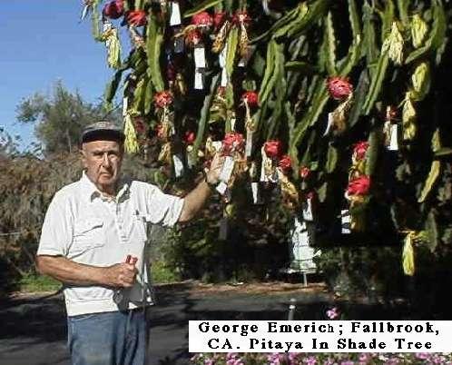 how to grow dragon fruit in california